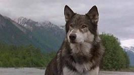 зов предков собака