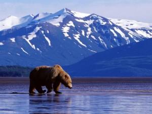 избр 3 Аляска1-300x225